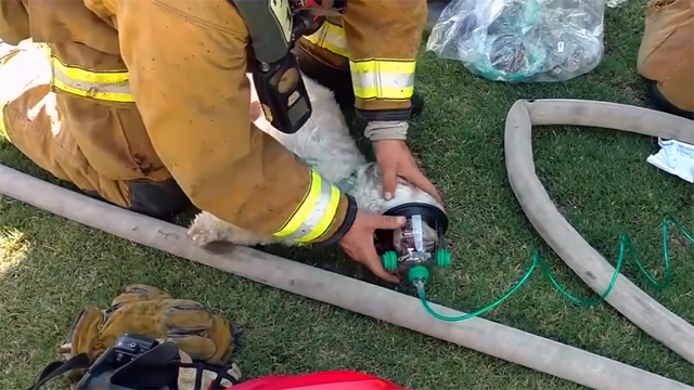 Firefighter revives dog rescued from house fire