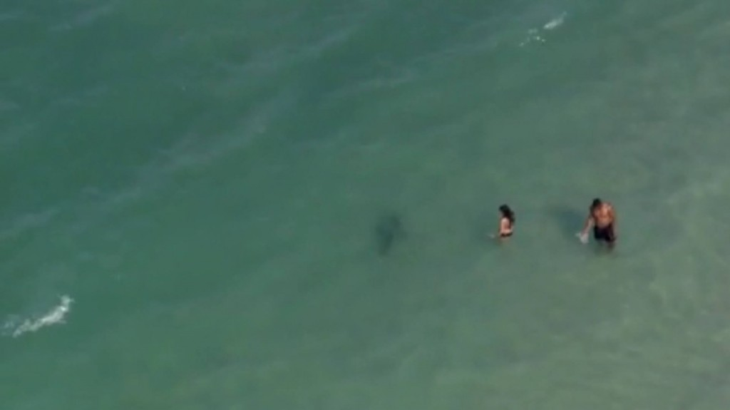 Helicopter spots sharks feet away from swimmers at Daytona Beach