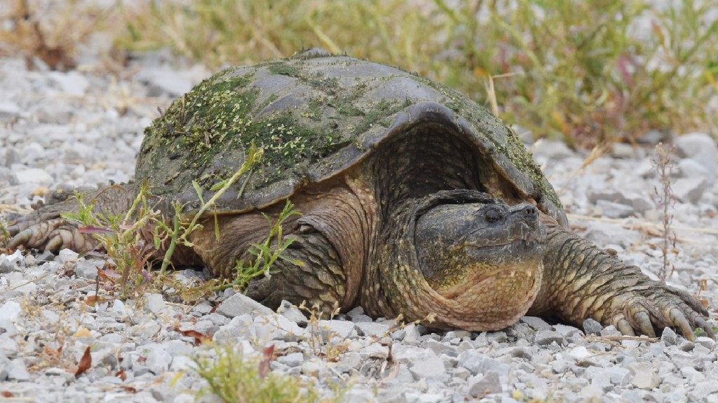 The Latest: Turtle euthanized amid reports it ate a puppy