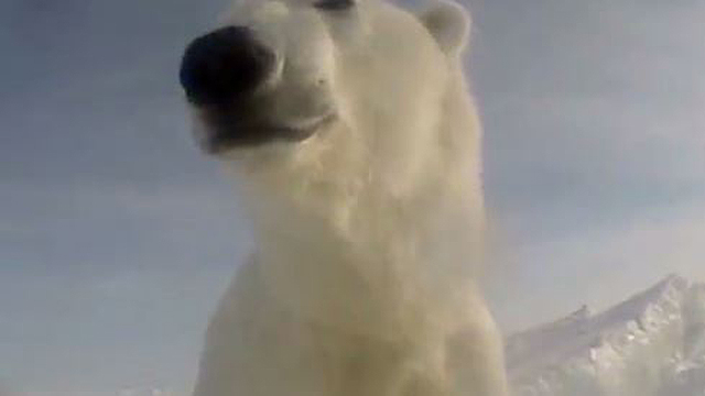 Man mauled by polar bear in Canada was trying to protect his children