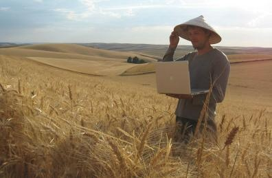 Washington wheat farmers expect to benefit from their winter-wheat crop
