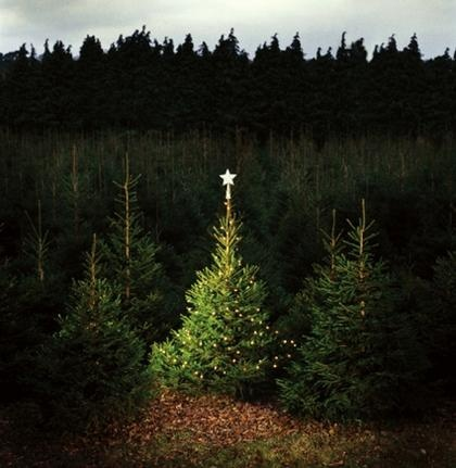 20th Annual Boy Scout Christmas Tree Sale