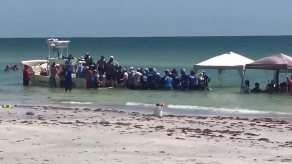 Crews free five beached whales in Florida