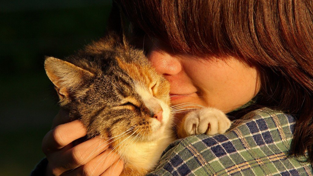 Yes, cats really do bond with people, study says