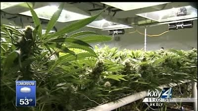 Kettle Falls Five case could impact Wash. marijuana industry
