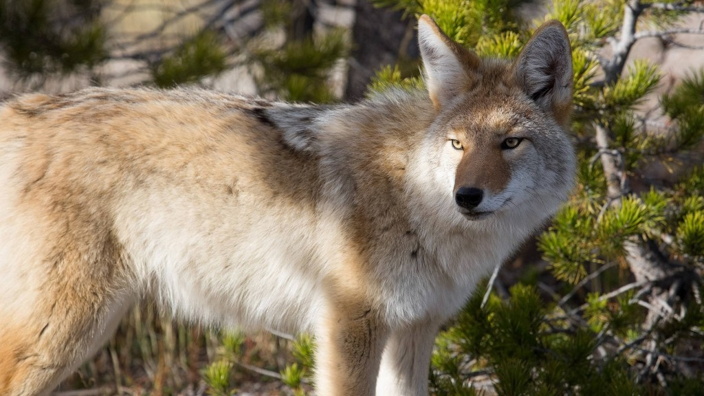 Mom, son attacked by coyote in New Jersey park
