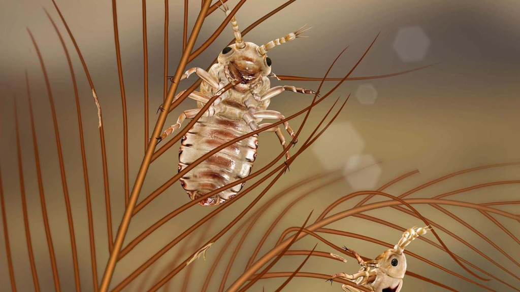 Insects trapped in amber show that lice munched on feathered dinosaurs