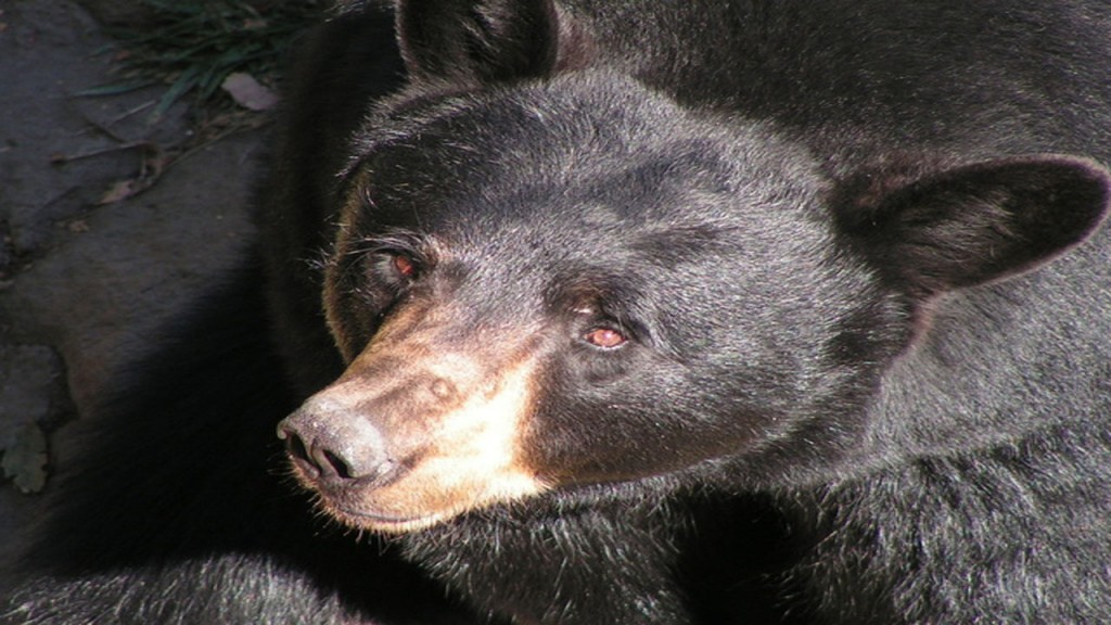 Alaskan father and son sentenced for killing a bear and her shrieking cubs
