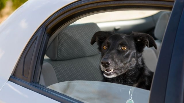 Pets need seat belts too, expert says