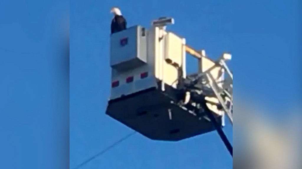 Eagle becomes part of firefighters' 9/11 tribute