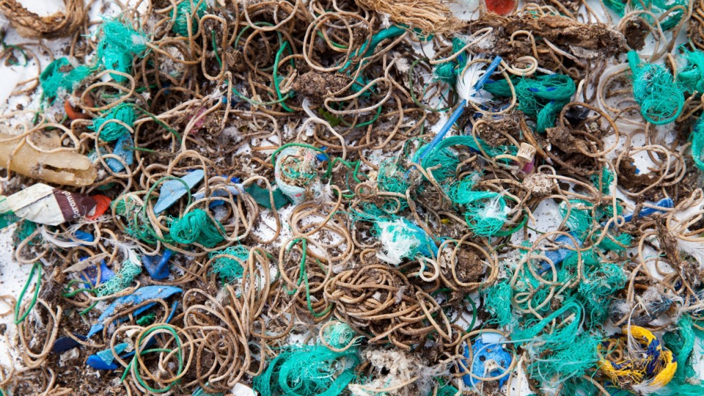 Why sea birds regurgitated thousands of rubber bands
