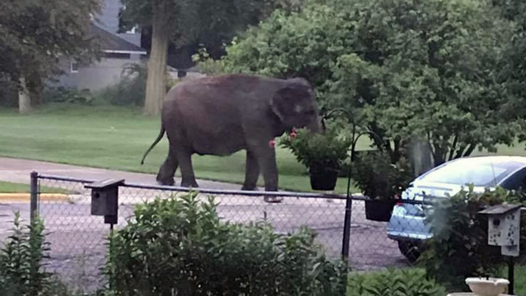 Elephant takes morning stroll through Wisconsin neighborhood