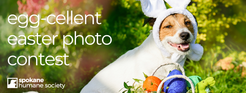 Eggcellent Easter Photo Contest Fb Cover 2020