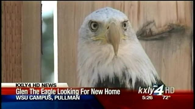 Glen the Eagle surviving, but may never fly again
