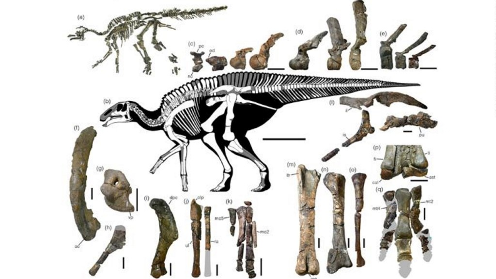 New first of its kind dinosaur unearthed