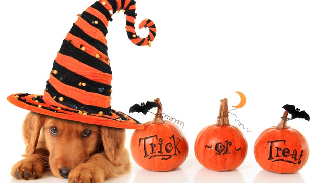 Tips for keeping your pets safe on Halloween