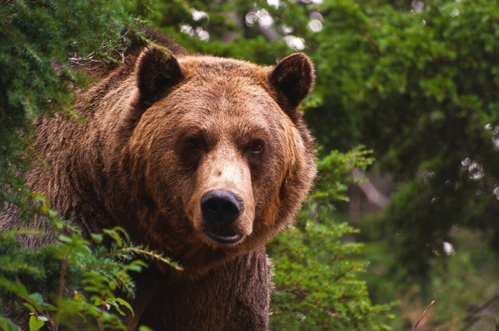 Grizzly bear bites two Idaho workers