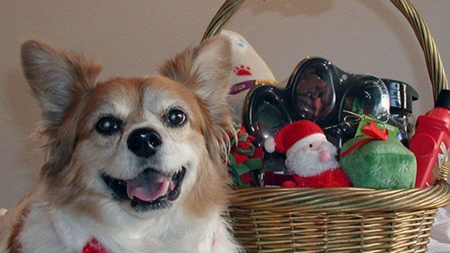 Gifts to put in dog's holiday basket