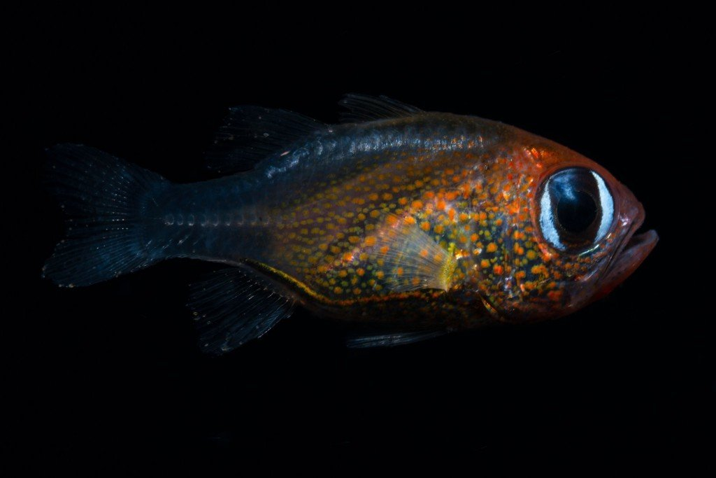 Scientists discovered 71 new species this year
