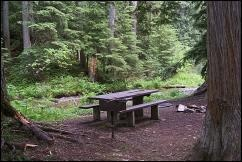 Idaho Panhandle National Forest assessing trees following campsite death
