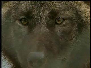 Idaho Fish and Game pays $30,000 to kill 23 wolves