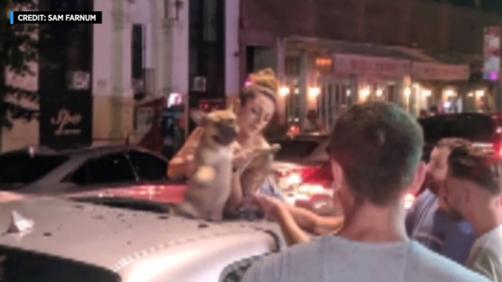 French bulldog survives 6-story plunge from New York building