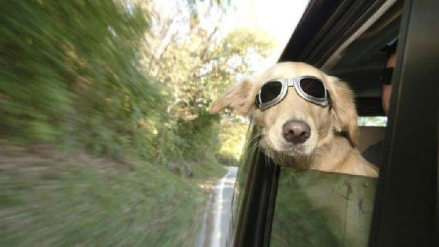 Dogs can enjoy road trips with preparation