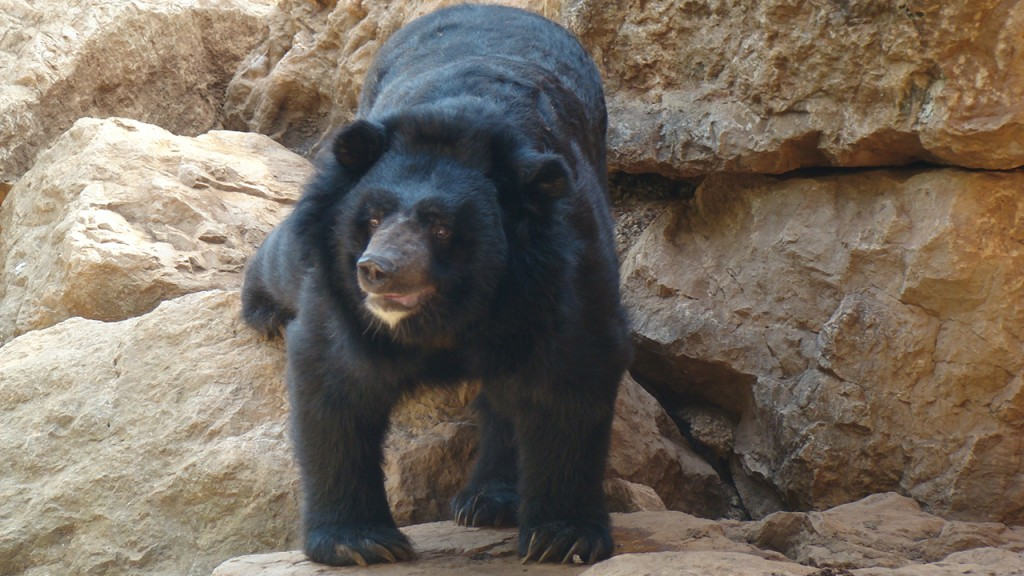 Family realizes its 'puppy' is actually black bear