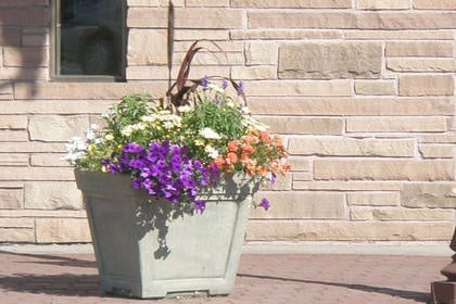 Grow beautiful flowers without leaving home