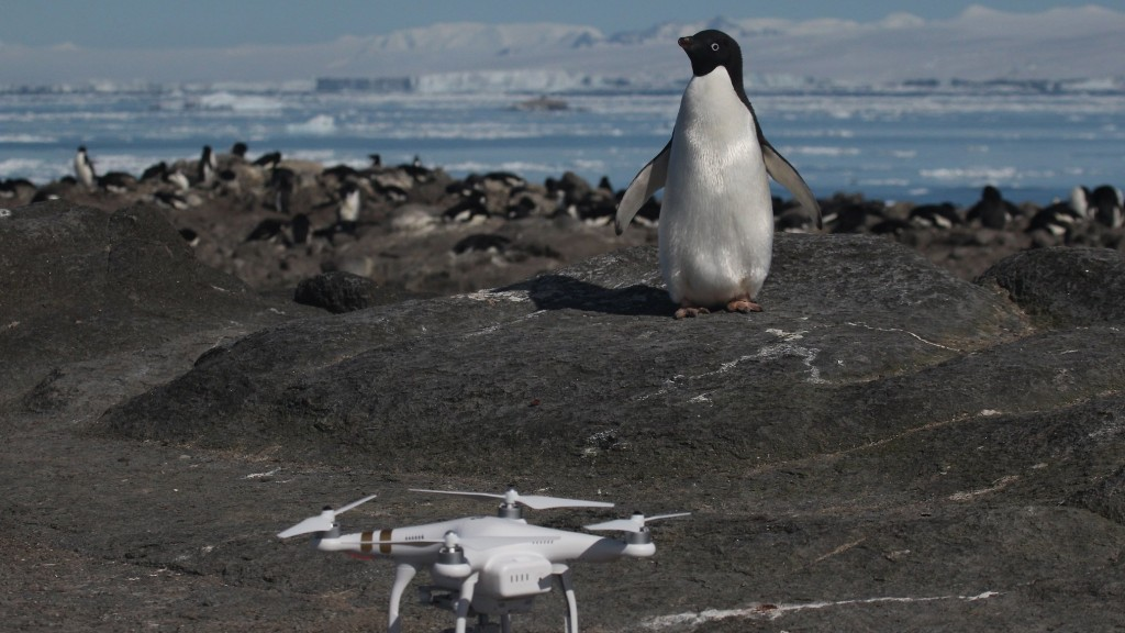 Scientists find mega-colony of penguins