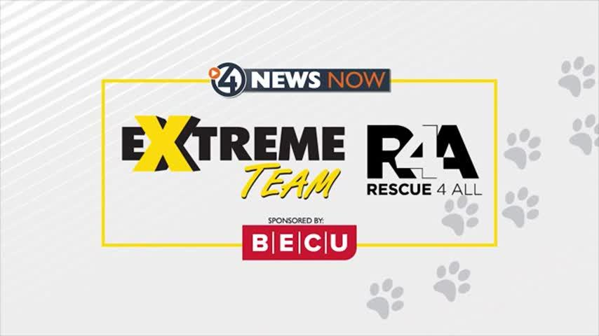 Extreme Team reveal day is here!