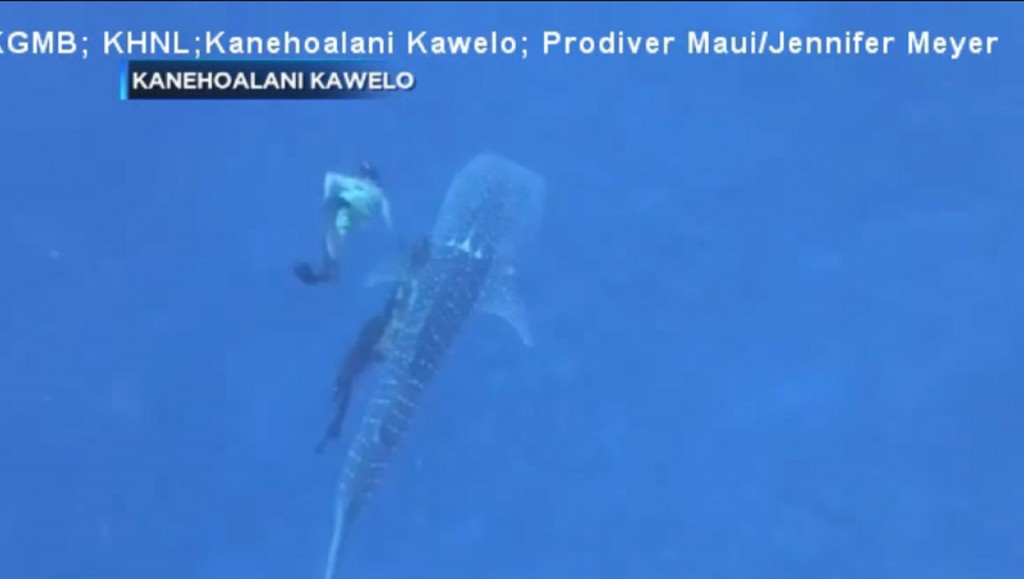 Family frees whale shark tangled in rope