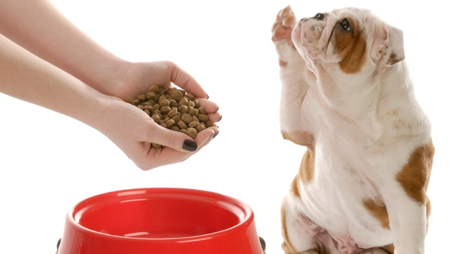 Measure out how much food and treats your dog eats