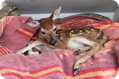 Leave the Fawns Alone!