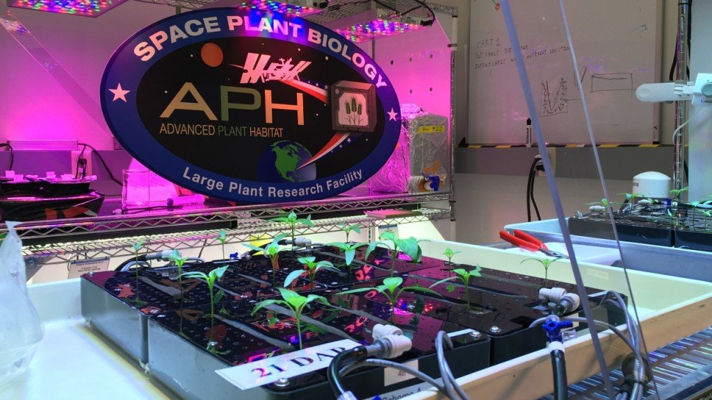 Española chile pepper to be first fruiting plant NASA grows in space