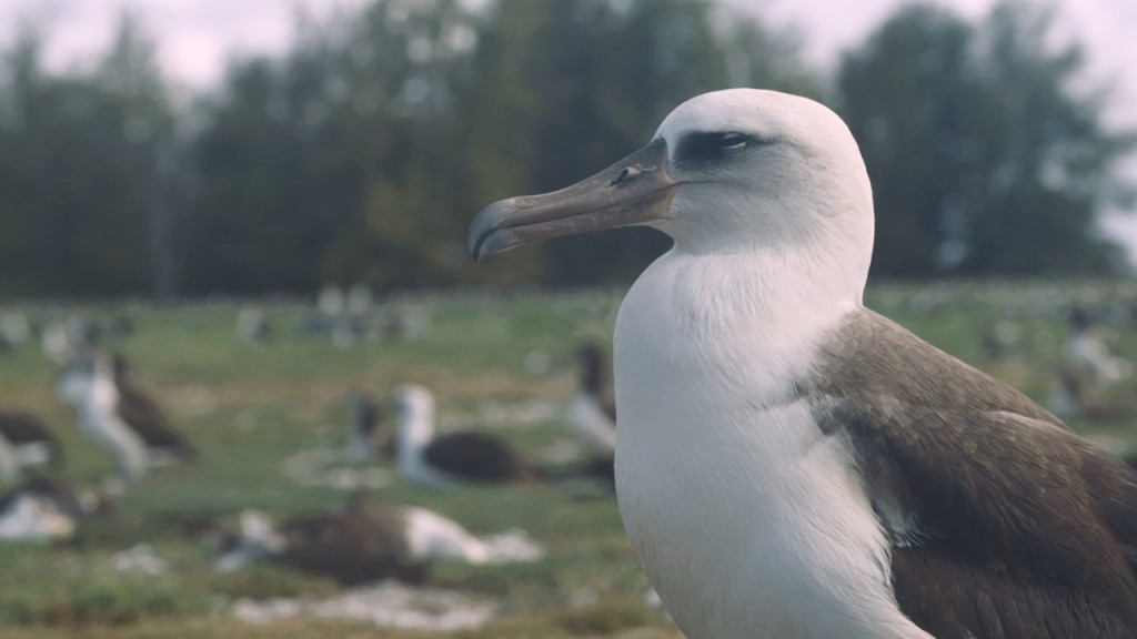Plastic pollution makes seabirds smaller, sicker