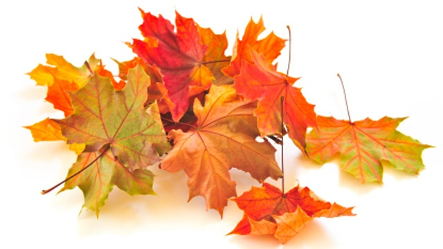 Why fall leaves change color