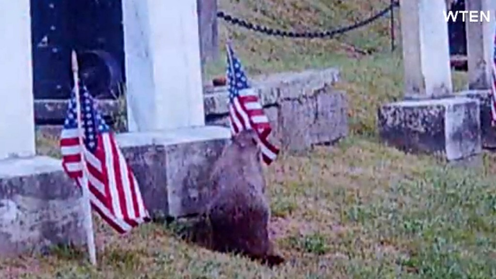 Woodchucks responsible for missing flags at cemetery