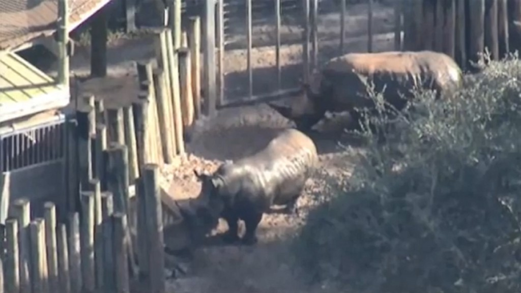 Report details injuries to toddler who fell into Florida zoo's rhino exhibit