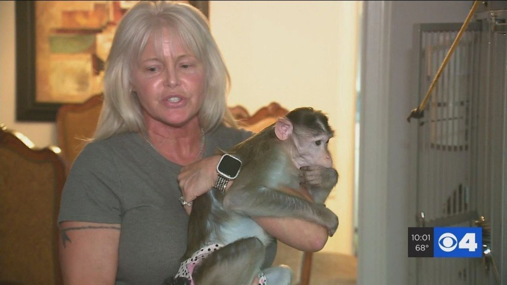 Missouri woman fighting to keep emotional support monkeys