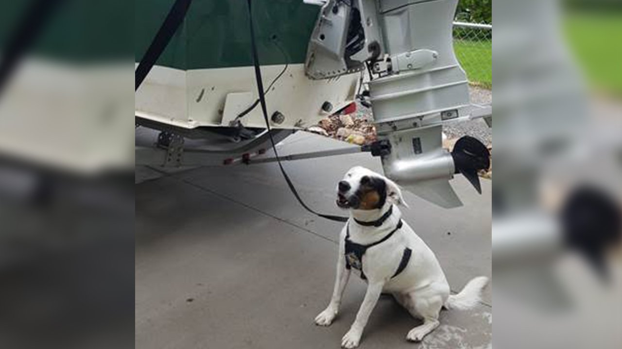 Puddles the mussel-sniffing dog saves Washington waters from invasive species - KXLY