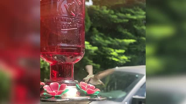 4 News Now Viewer Captures Hummingbird Feeding In Slow Mo