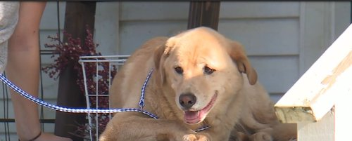 Dog Somehow Makes 57 Mile Journey To Her Old Home In Lawson