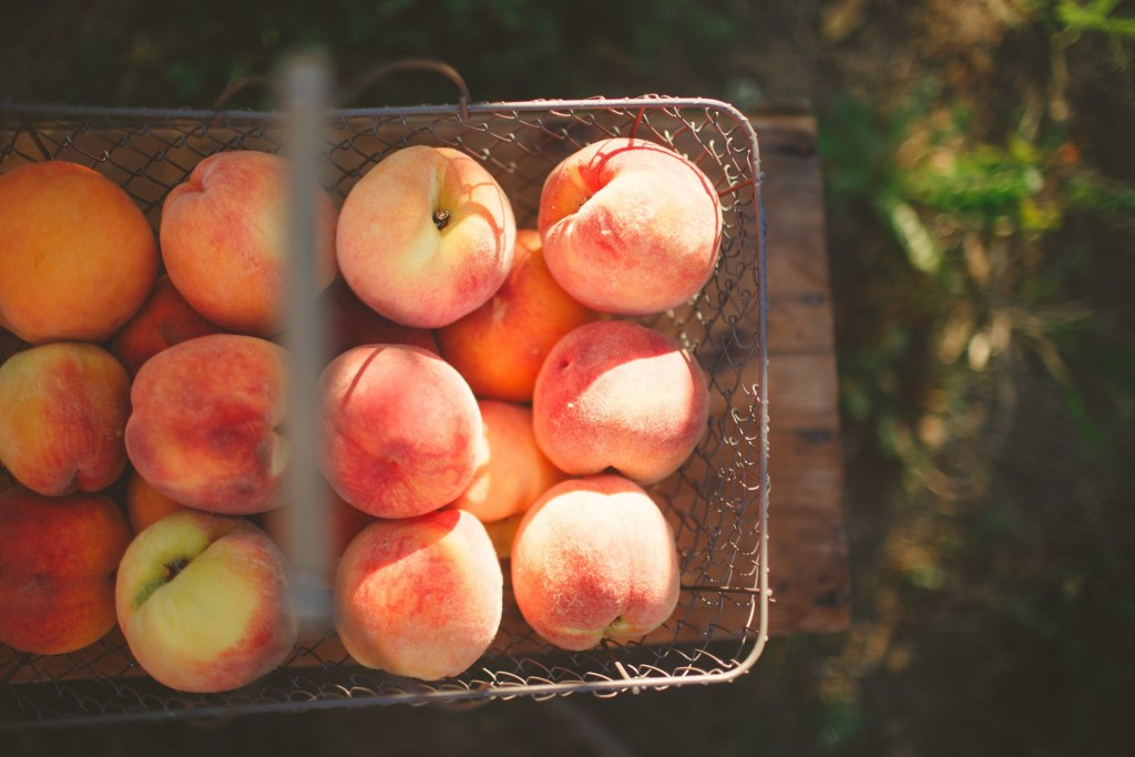 U-pick peaches at Green Bluff