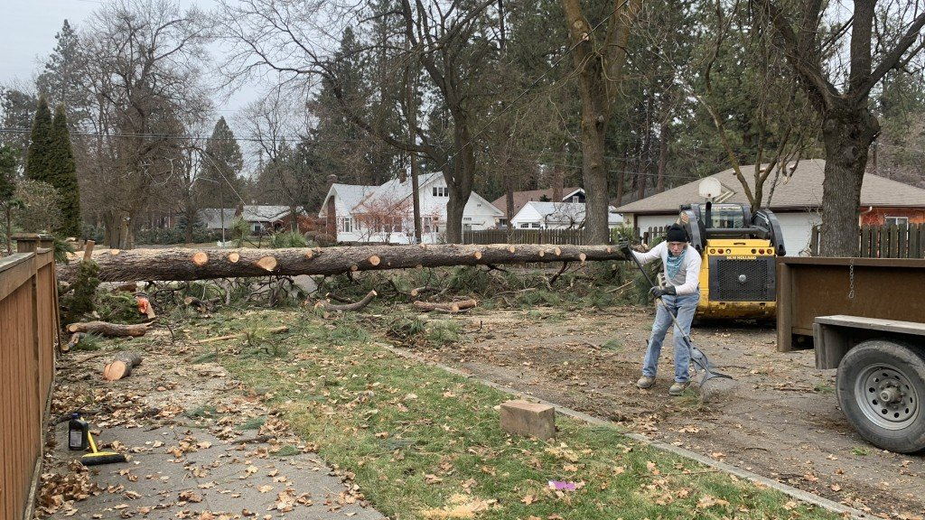 South Hill Tree Still Down Days Later from 2021 windstorm