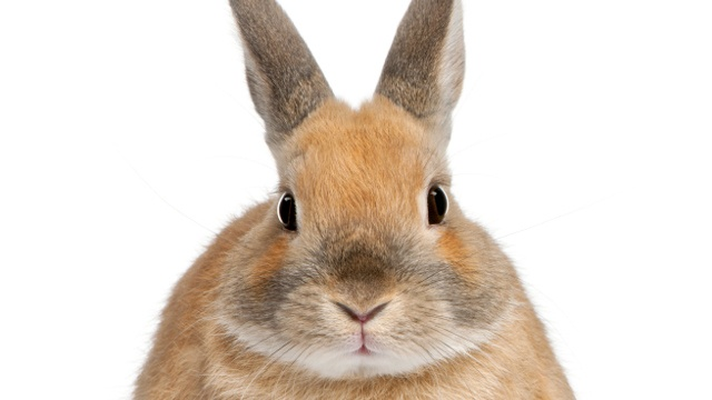 Rabbit disease in Idaho