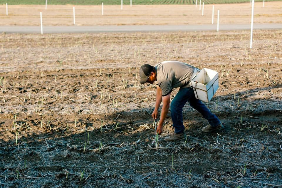 Wa Agriculture Worker