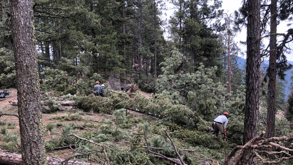 Blm Mineral Ridge Windstorm Cleanup 1