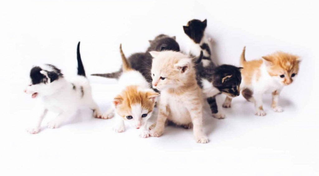 Lap Up These Nutrition Tips For A Healthy Kitten