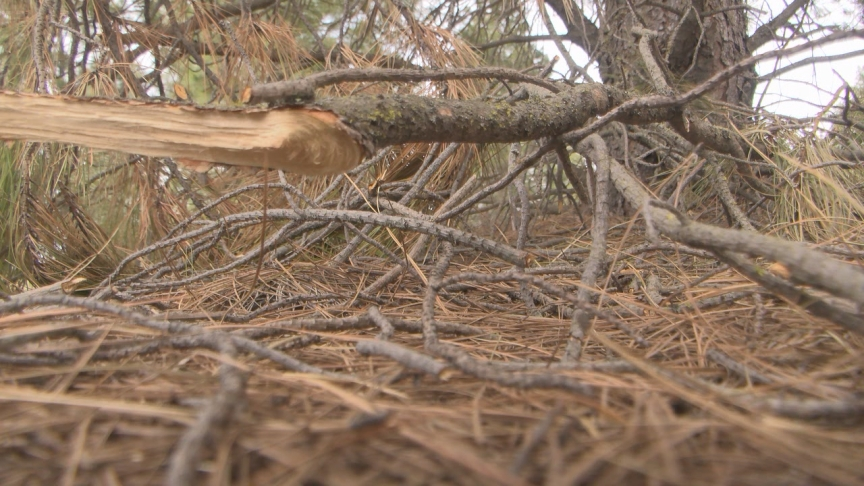 Prepping your home for fire season